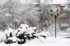 Sneeuw behandelde bomen en Kerstbomen Stock Afbeelding