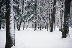 Sneeuw behandelde bomen in het de winterbos royalty-vrije stock fotografie