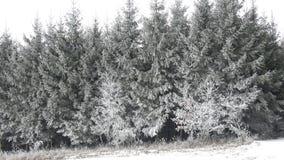 Sneeuw Behandelde Bomen Landschap van de de winter het bos Mooie winter Het toneel Landschap van de Winter stock videobeelden
