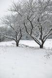 Sneeuw behandelde bomen op een gebied. Stock Foto