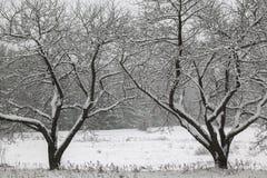 Sneeuw behandelde bomen op een gebied. Royalty-vrije Stock Afbeeldingen