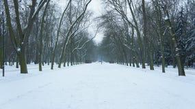 Sneeuw behandelde bomen in park stock foto's