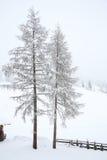 Sneeuw behandelde bomen in platteland Stock Foto's