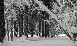 Sneeuw behandelde bomenlijn een weg in een alpien bos stock afbeelding