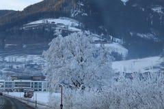 Sneeuw behandelde boom Stock Afbeeldingen