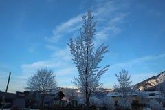Sneeuw behandelde boom Stock Afbeelding