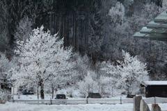 Sneeuw behandelde boom Royalty-vrije Stock Foto