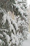 Sneeuw behandelde boom royalty-vrije stock afbeeldingen