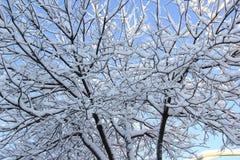 Sneeuw behandelde boom Stock Foto's