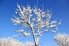 Sneeuw behandelde boom royalty-vrije stock fotografie
