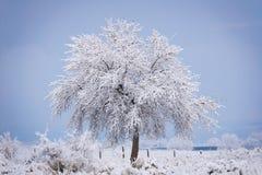 Sneeuw behandelde boom Stock Foto