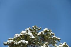 Sneeuw behandelde boom Royalty-vrije Stock Foto's