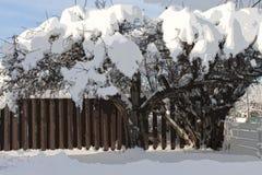 Sneeuw behandelde boom - abstracte kunst - illastration Stock Fotografie