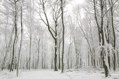 Sneeuw behandelde boomboomstammen Stock Fotografie