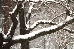 Sneeuw behandelde boomtak Stock Foto's