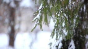 Sneeuw behandelde boomtak in de wintertijd Kerstmis stock footage