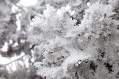 Sneeuw behandelde boomtakken stock fotografie