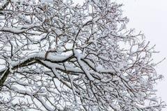 Sneeuw behandelde boomtakken tijdens sneeuwonweer Royalty-vrije Stock Afbeeldingen
