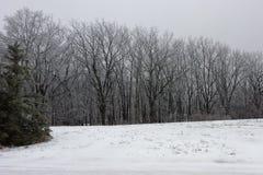 Sneeuw behandelde bos en pijnboomboom Stock Foto