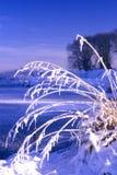 Sneeuw behandelde grassen Stock Afbeelding