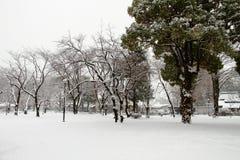 Sneeuw behandelde grond Stock Foto's