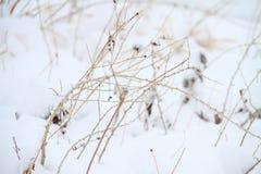 Sneeuw behandelde grond Stock Afbeelding