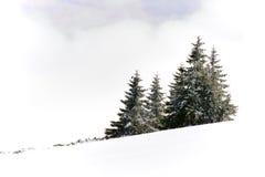 Sneeuw behandelde helling stock foto