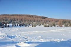 Sneeuw Behandelde Heuvel Stock Foto