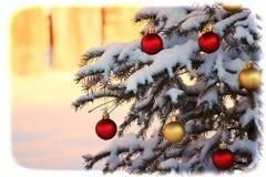 Sneeuw behandelde Kerstboom Stock Afbeeldingen