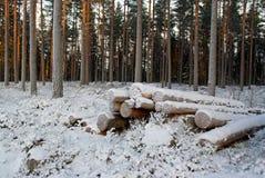 Sneeuw Behandelde Logboeken Stock Afbeeldingen