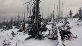 Sneeuw behandelde meevaller en pijnbomen in de bergen stock video