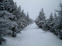Sneeuw behandelde nette bomen Stock Foto's