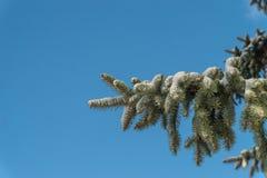 Sneeuw behandelde nette boomtak royalty-vrije stock foto's