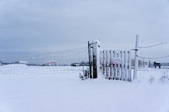 Sneeuw Behandelde Omheining Stock Foto's