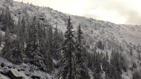 Sneeuw Behandelde Pijnbomen in de Sneeuwbergen stock videobeelden