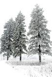 Sneeuw behandelde pijnboombomen royalty-vrije stock afbeelding