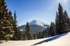 Sneeuw behandelde pijnboombomen in Karpatische bergen in zonnige de winter Stock Afbeelding