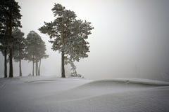 Sneeuw behandelde pijnboombomen in mist Royalty-vrije Stock Foto