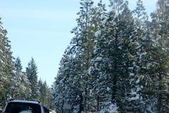 Sneeuw behandelde Pijnboombomen op Kerstmisdag in Shasta-Bergen Royalty-vrije Stock Foto