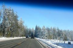 Sneeuw behandelde Pijnboombomen op Kerstmisdag in Shasta-Bergen Royalty-vrije Stock Foto's