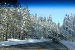 Sneeuw behandelde Pijnboombomen op Kerstmisdag in Shasta-Bergen Stock Foto's