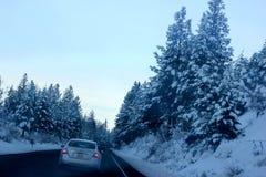 Sneeuw behandelde Pijnboombomen op Kerstmisdag in Shasta-Bergen Royalty-vrije Stock Fotografie