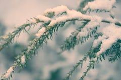 Sneeuw Behandelde Retro Dollekerveltak - Royalty-vrije Stock Foto