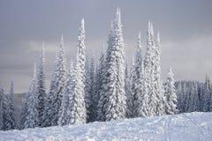 Sneeuw Behandelde Schweitzer Royalty-vrije Stock Foto