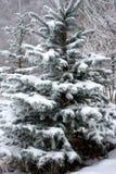 Sneeuw behandelde sparren Royalty-vrije Stock Fotografie