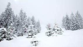 Sneeuw behandelde sparren. Sneeuwval stock footage