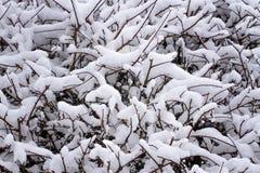 Sneeuw behandelde struiktakken in de winterpark als achtergrond Royalty-vrije Stock Afbeeldingen