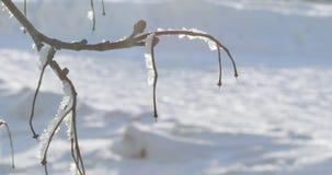 Sneeuw behandelde takken stock footage