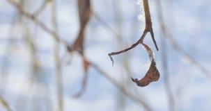 Sneeuw behandelde takken stock videobeelden