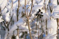 Sneeuw behandelde takken als abstract landschap als achtergrond of de winter Royalty-vrije Stock Afbeeldingen